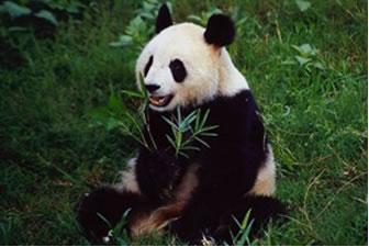 A herbivoria é uma relação interespecífica prejudicial às plantas