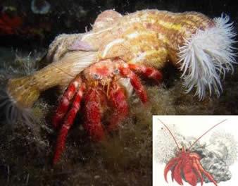 Forma independente de mutualismo entre diferentes espécies.