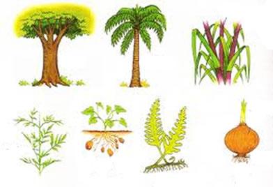 Na natureza existem diversos tipos de caules