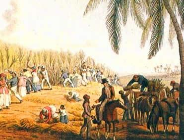 A economia açucareira foi de grande importância na consolidação dos interesses econômicos da metrópole.
