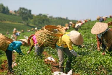 A agricultura de jardinagem inclui pouca tecnologia e muita mão de obra