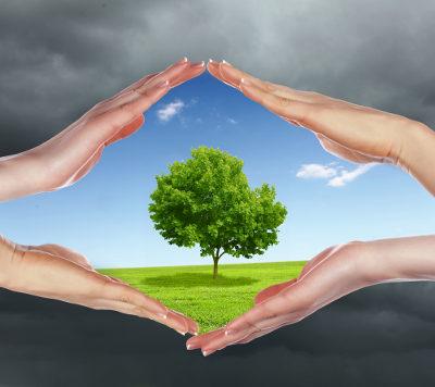 Um meio ambiente saudável é direito de todos