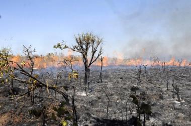 A ação do fogo no Cerrado é um dos principais problemas para a sua conservação ¹