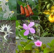 A variedade de espécimes botânicas.