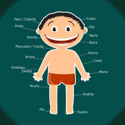 Veja na figura acima alguns nomes das partes do corpo humano em Espanhol