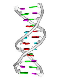 Os ácidos nucleicos foram, a princípio, identificados no núcleo das células