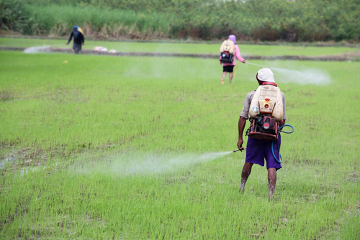 Ao utilizar agrotóxicos sem a devida proteção, o trabalhador rural coloca em risco sua saúde