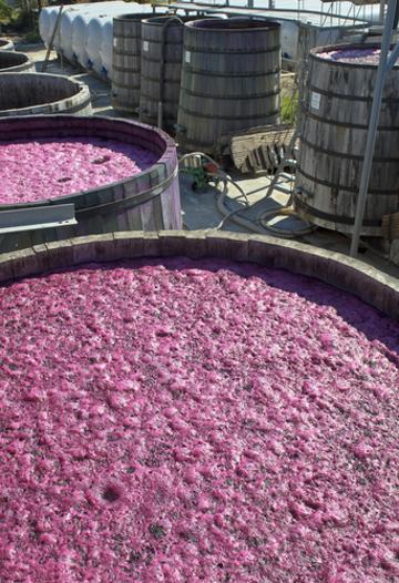 O vinho só é fabricado graças à fermentação