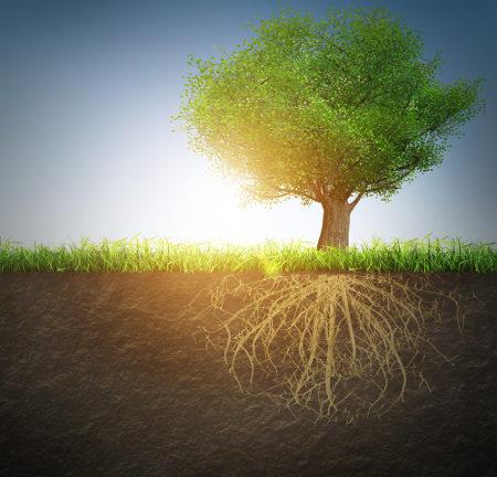 As raízes garantem a absorção de água e nutrientes para a planta