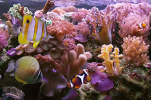 Os peixes respiram o gás oxigênio dissolvido na água.