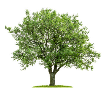No dia 21 de setembro, comemora-se o Dia da Árvore.