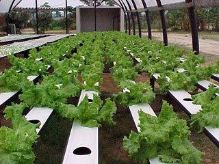Horta que utiliza hidroponia