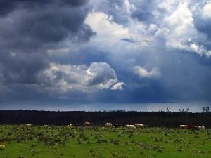 Área de campo no Rio Grande do Sul.