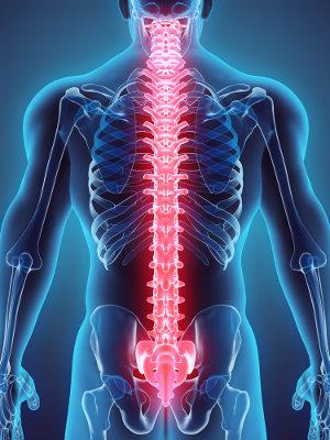 A coluna vertebral é um eixo de sustentação formado por vértebras