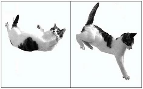 Gato em queda livre (1ª imagem – suposição de queda do primeiro andar de um edifício; 2ª imagem – suposição de queda do terceiro andar de um edifício)