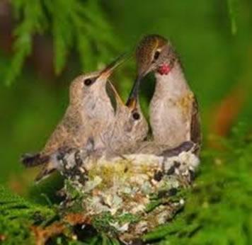 1e4255eb76 As aves são animais que conseguem manter a temperatura corporal constante