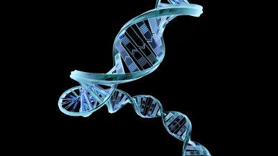 Todos os tipos de RNA são formados a partir de uma molécula de DNA