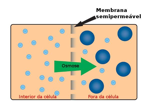 Osmose é um processo de movimentação da água através de uma membrana semipermeável.