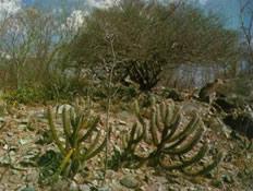 O aspecto seco do ecossistema Caatinga.