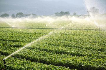 Você já se perguntou quanta água foi utilizada na produção do seu alimento?