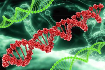 A Anemia de Fanconi é uma doença genética determinada por diversos genes