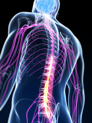 Os nervos periféricos e craniais são acometidos pela SGB