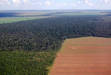 Produção de soja na Floresta Amazônica