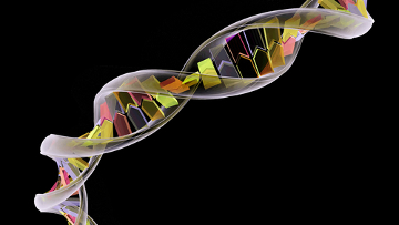 O DNA, ou ácido desoxirribonucleico, é um tipo de ácido nucleico