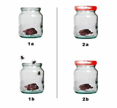 Na figura acima podemos ver um experimento semelhante ao feito por Francesco Redi