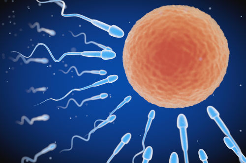 A fecundação garante a transmissão de características aos descendentes