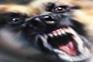 Comportamento raivoso é um dos sintomas da hidrofobia.