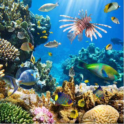 O carbonato de cálcio está presente nos recifes de corais