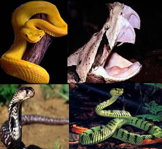 As serpentes possuem muitas características particulares