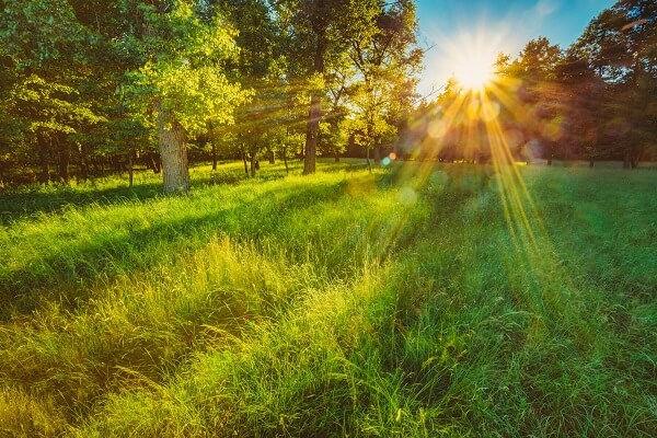 A natureza fornece os recursos necessários para a nossa sobrevivência.