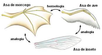 Organismos diferentes com fisiologia estrutural semelhante.