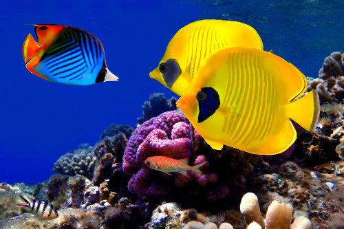 Para viver no ambiente aquático, os peixes contam com várias importantes adaptações