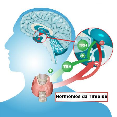 Representação da síntese de hormônios tireoidianos pelo mecanismo de feedback negativo