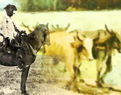 O vaqueiro: uma das figuras peculiares da atividade pecuarista colonial.