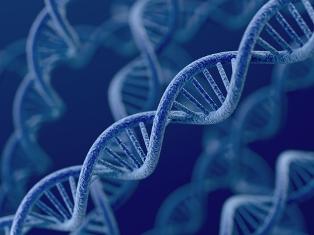 A Distrofia Miotônica de Steinert é uma doença genética autossômica dominante