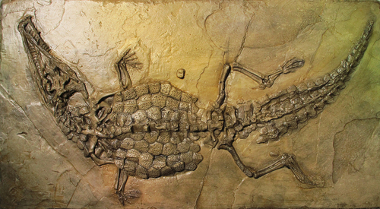 Fóssil de uma espécie de crocodilo datado com mais de 160 milhões de anos