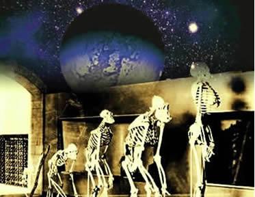 Os diversos estágios conhecidos do processo evolutivo que deu origem à espécie humana.