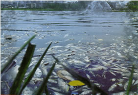 Por que este tipo de poluição agride a vida aquática?
