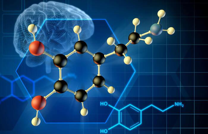 A dopamina é um importante neurotransmissor.