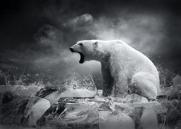 A destruição de habitat é uma das causas da perda da biodiversidade
