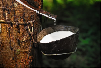 Extração de látex de seringueira para obtenção da borracha natural