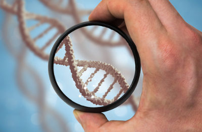 A Genética permite a avaliação dos possíveis genótipos em um cruzamento