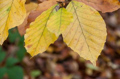 Por que as folhas adquirem estas cores?