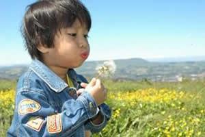 Disseminação de sementes de dente-de-leão por uma criança: anemocoria ou antropocoria?
