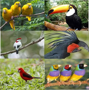 As aves são animais inteligentes e com comportamentos complexos e elaborados