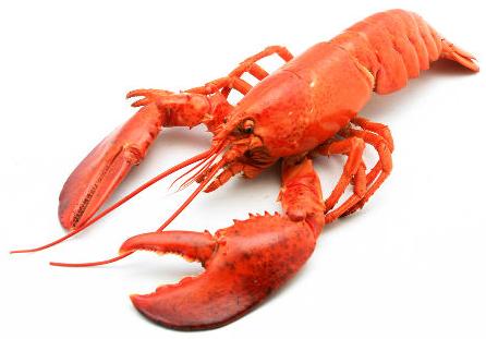 A lagosta é um tipo de artrópode do grupo dos crustáceos